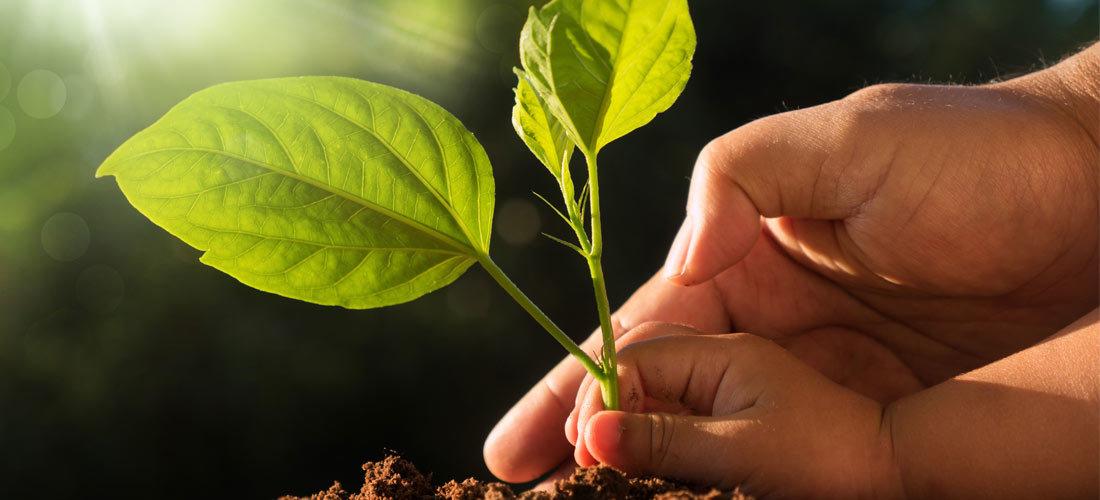 Los recursos naturales del planeta para 2019 ¡ya se han terminado!