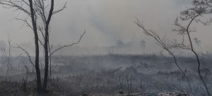 Imagen de un bosque tras un incendio forestal