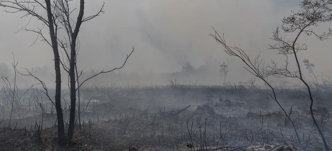 Qué sucede tras un incendio forestal