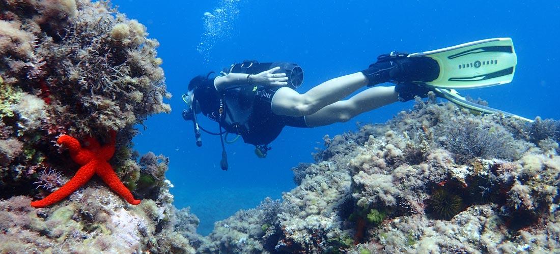 Los montes submarinos de Ibiza pueden ser Lugar de Importancia Comunitaria (LIC)