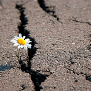Flor en asfalto, símbolo de emergencia climática