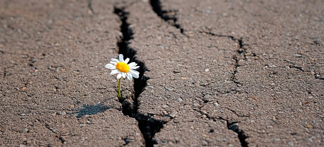 11.000 científicos declaran la emergencia climática