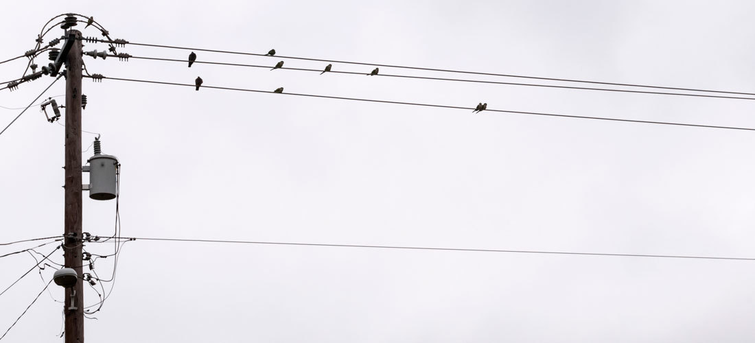 Lucha contra la electrocución de aves