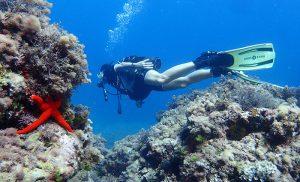 Proyecto restaura coral