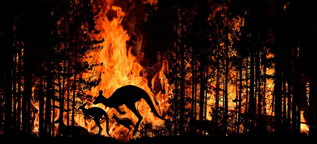 ¿Afectan los incendios forestales al Cambio Climático?